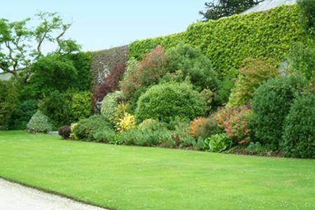 Siepi e giardini giardinaggio padova - Alberi condominiali in giardini privati ...